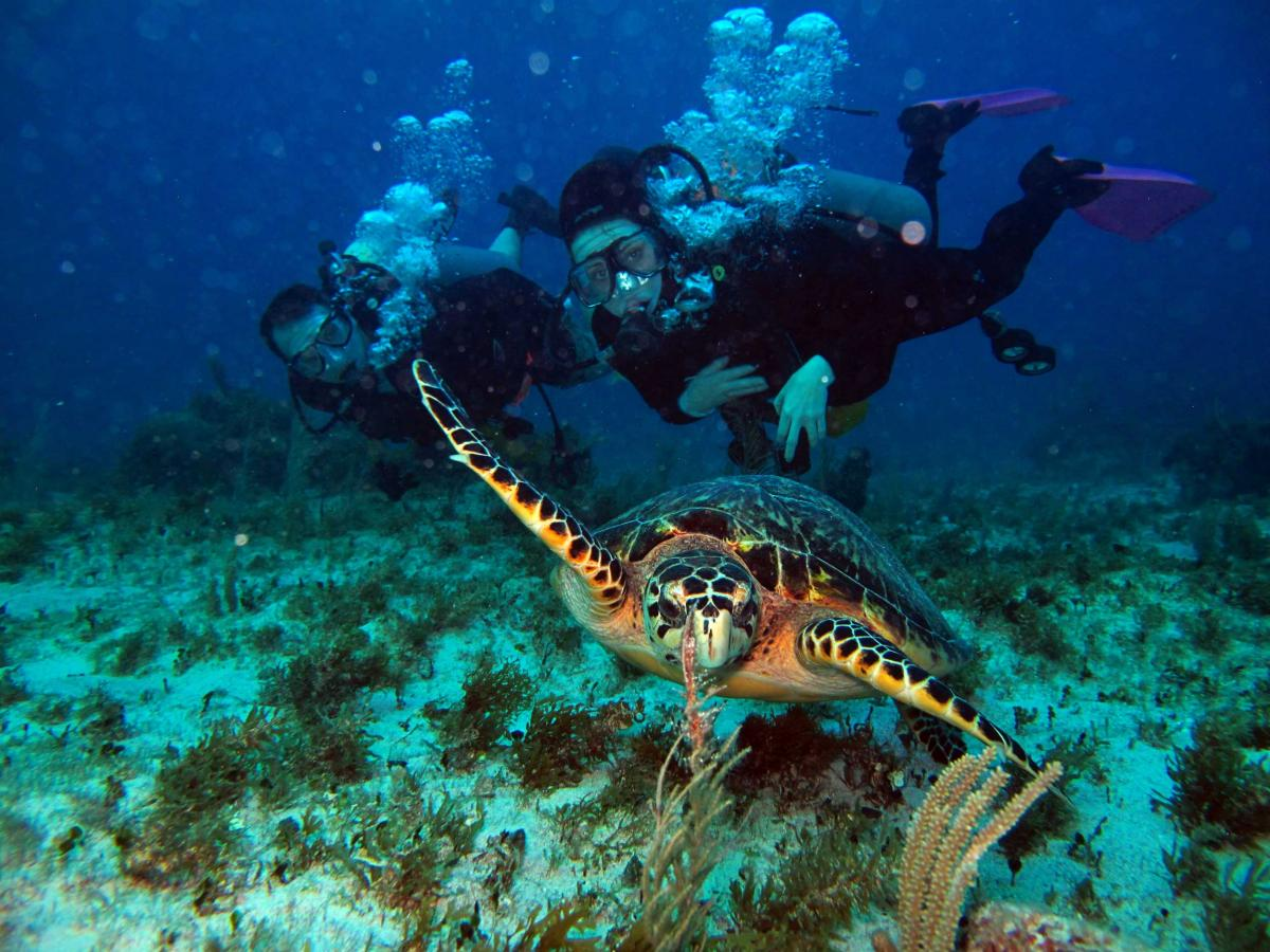 Diving In Alanya: Scuba Diving In The Crystal Clear Waters