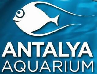 Antalya Aquarium: Book Now for the World's Biggest Tunnel Aquarium